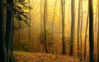 Бесплатные фото осень,туман,лес,деревья,листья,природа