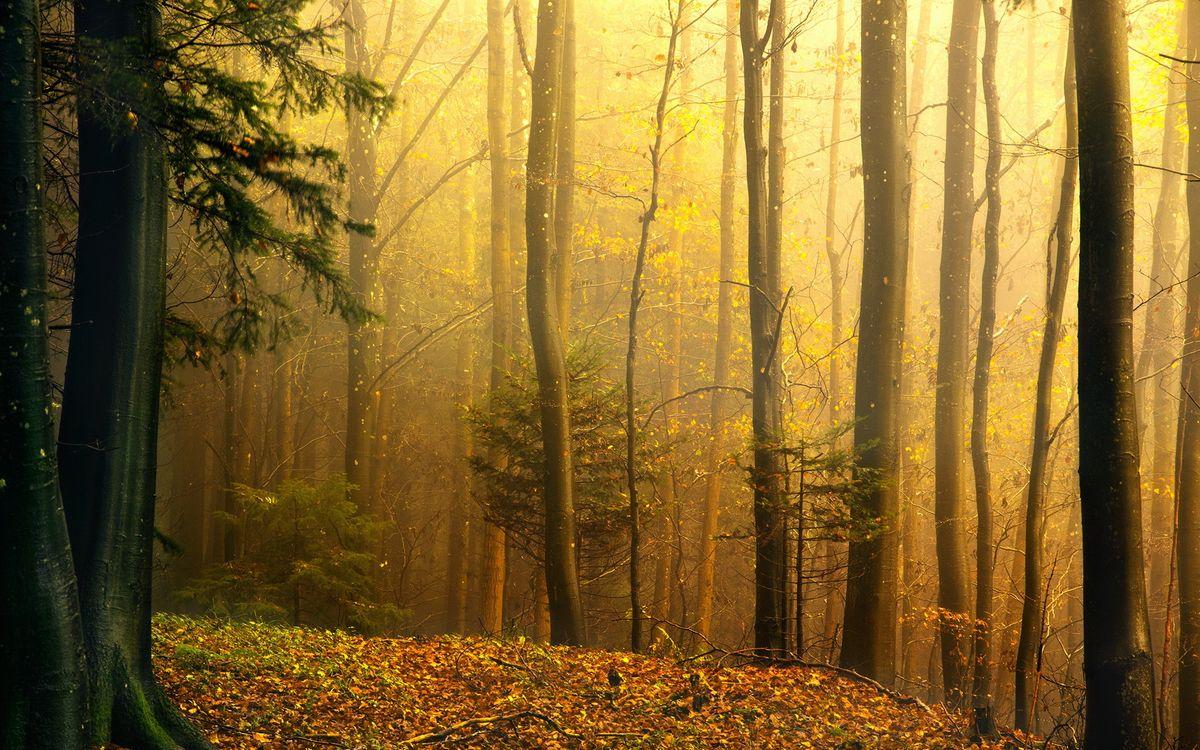 Фото бесплатно осень, туман, лес - на рабочий стол