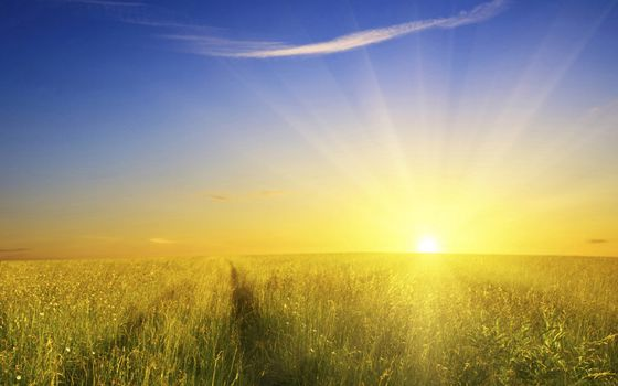 Photo free field, sun, rays