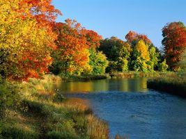Бесплатные фото река,лес,деревья,трава,осень,красиво,природа