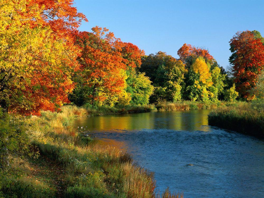 Обои река, лес, деревья картинки на телефон