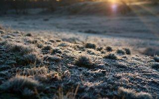 Бесплатные фото трава,мох,растения,травинки,песок,земля,солнце
