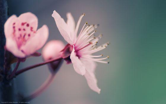 Заставки цветок, лепестки, весна