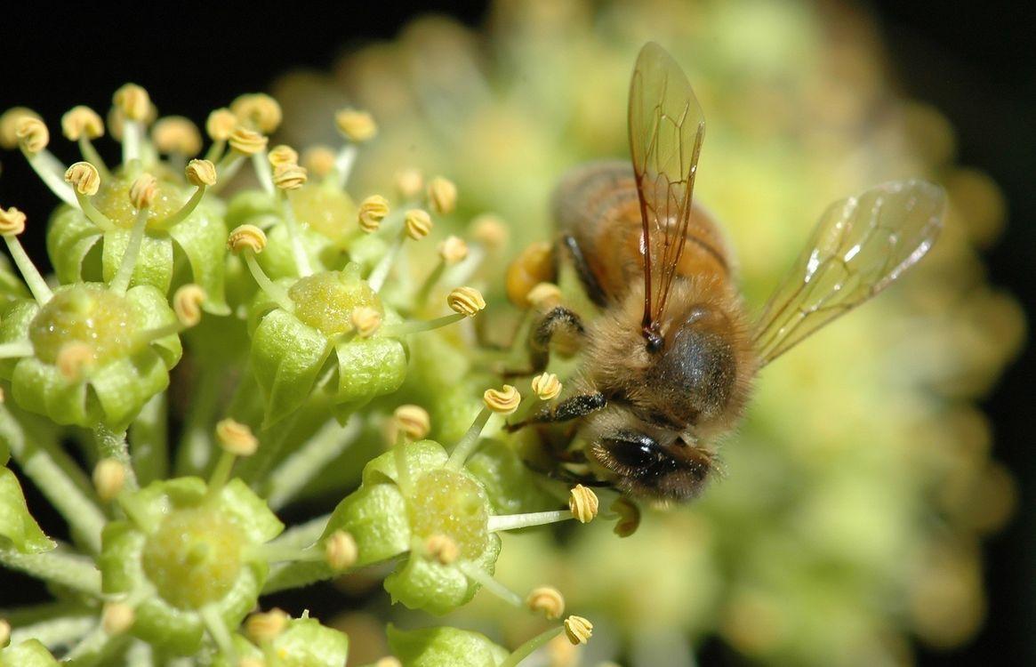 Фото бесплатно цветок, тычинки, пчела - на рабочий стол