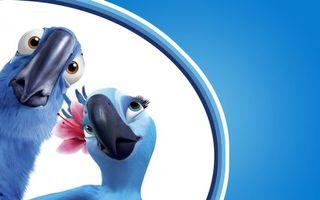 Бесплатные фото птицы,рио-де-жанейро,рио,мультфильм,попугаи
