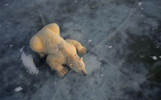 Заставки медведь, арктика, океан