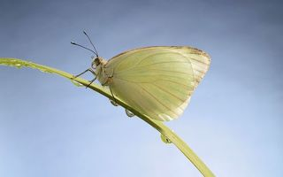 Заставки бабочка,крылья,лапки,хобот,трава,капли,вода