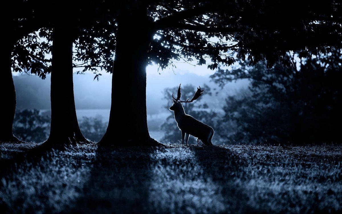 Фото бесплатно деревья, лес, олень - на рабочий стол