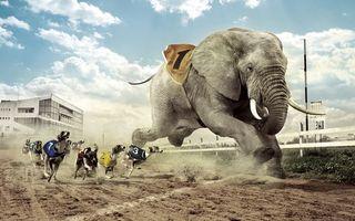 Бесплатные фото гонка,соревнование,собака,слон,песок,дорожка,небо