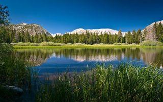 Фото бесплатно трава, природа, снег