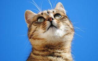 Бесплатные фото животные, природа, усы, небо, шерсть, кошки