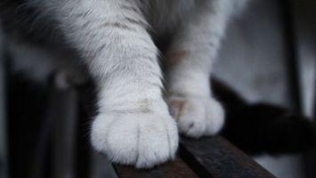 Фото бесплатно кот, лапки, ноги