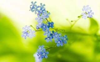 Бесплатные фото лепестки,синие,стебель,зеленый,веточка,цветы