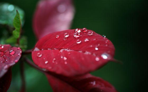 Заставки листок, капли, дождь