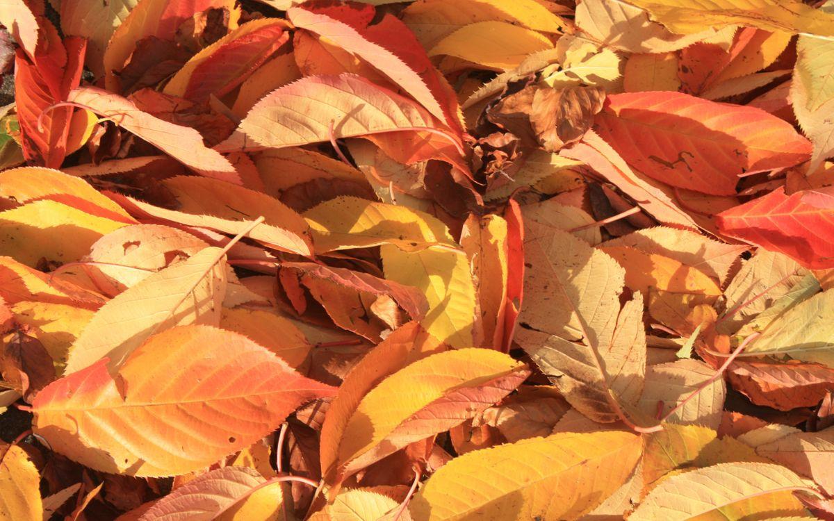 Фото бесплатно листья, желтые, листопад - на рабочий стол