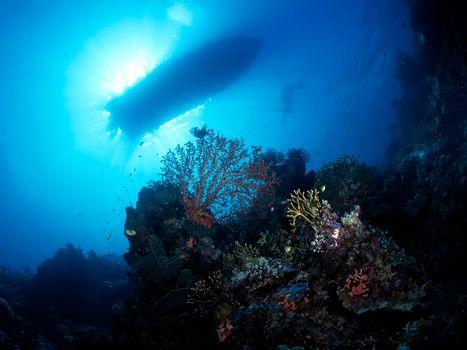 Фото бесплатно море, рифы, кораллы