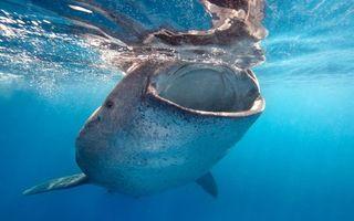 Фото бесплатно море, рыба, большая