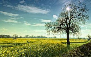 Бесплатные фото небо,облака,деревья,трава,поле,луг,кусты
