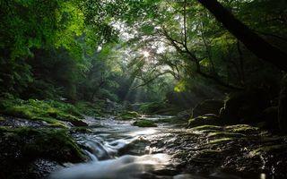 Фото бесплатно река, лес, солнце