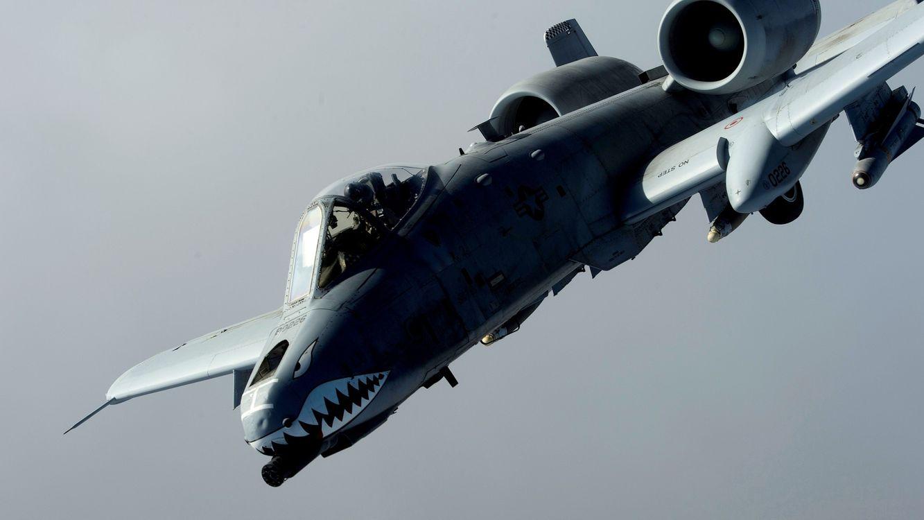 Фото бесплатно самолет, военный, акула - на рабочий стол