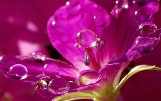 Фото бесплатно блеск, цветок, вода