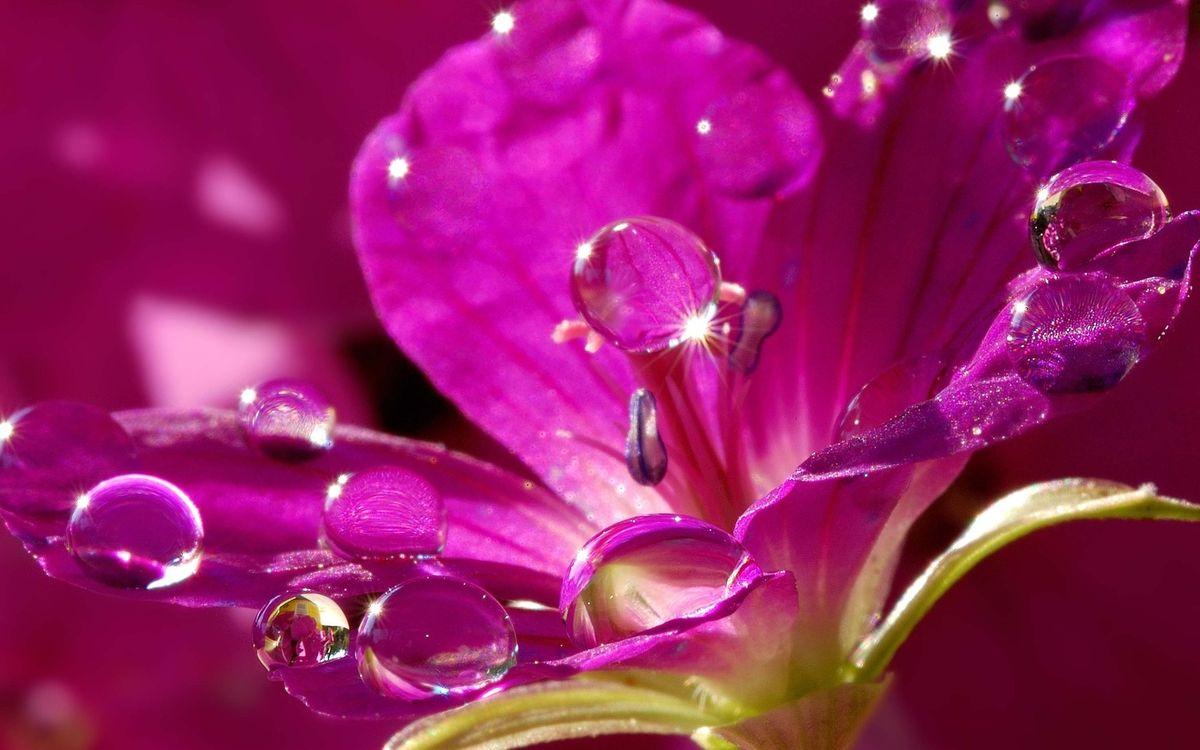 Фото бесплатно цветок, лепестки, розовые, капли, вода, блеск, цветы, цветы