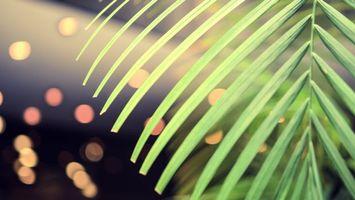 Фото бесплатно листья, свет, ветка