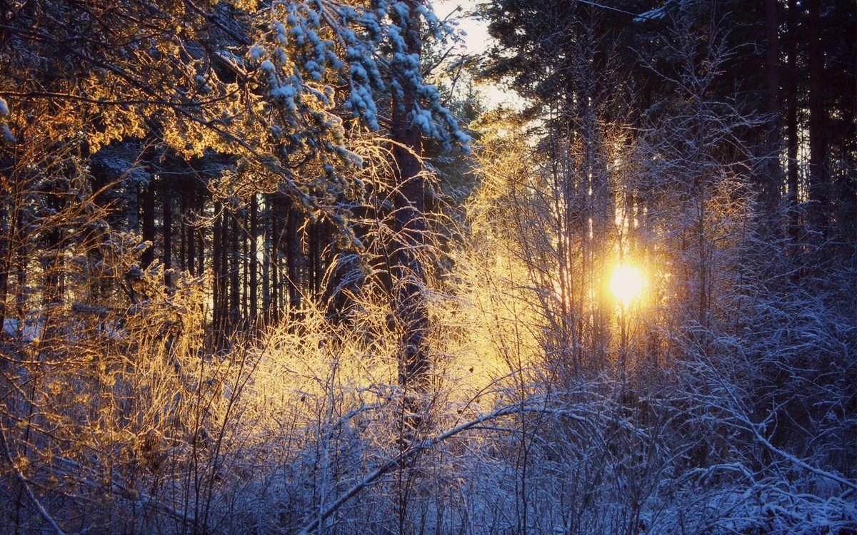 Фото бесплатно восход, солнце, зима, лес, деревья, елки, лучи, свет, снег, природа, природа