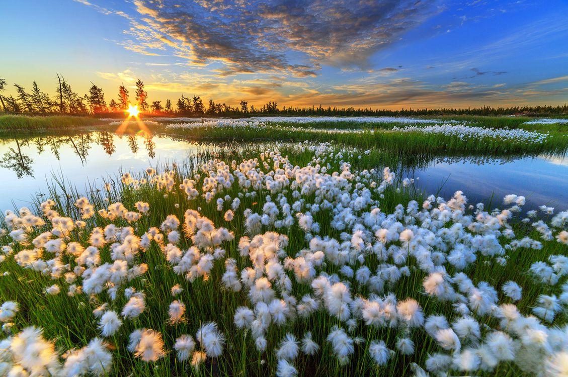 Фото бесплатно закат, цветы, озеро - на рабочий стол