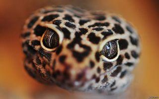 Фото бесплатно змея, кода, взгляд