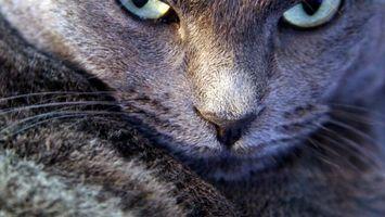 Фото бесплатно кот, глаза, взгляд