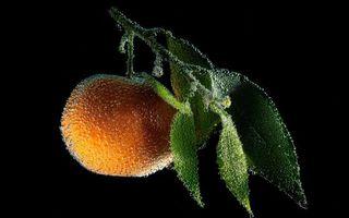 Бесплатные фото апельсин,ягода,ветка,листья,фон,черный,капли
