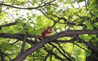 Бесплатные фото белка,морда,лапы,хвост,нерсть,дерево,ветви