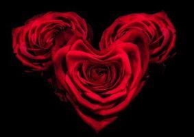 Бесплатные фото день святого валентина,день влюбленных,с днём святого валентина,с днём всех влюблённых,розы,Валентинка,Валентинки
