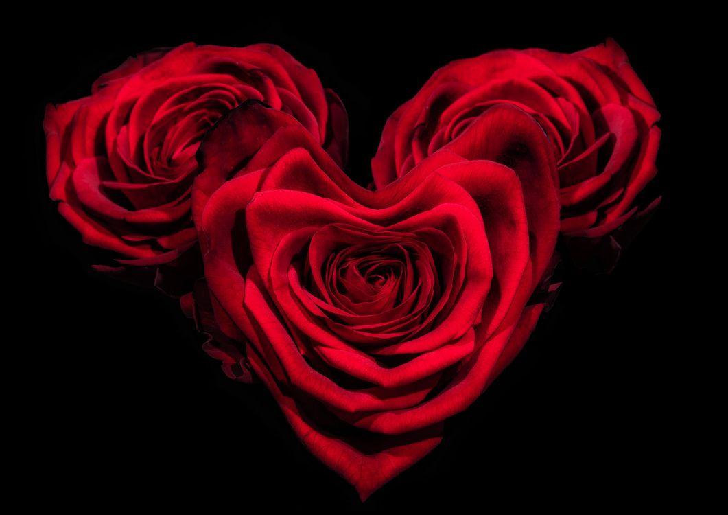 Фото бесплатно день святого валентина, день влюбленных, с днём святого валентина, с днём всех влюблённых, розы, Валентинка, Валентинки, цветы