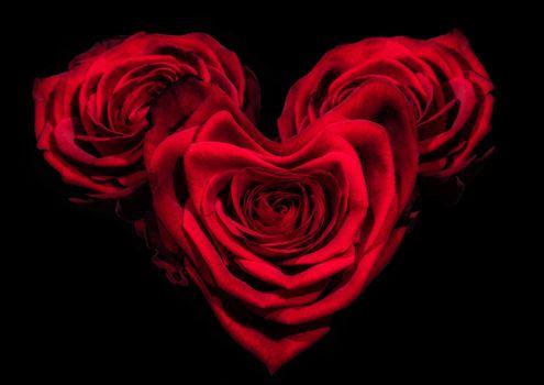день святого валентина, день влюбленных, с днём святого валентина, с днём всех влюблённых, розы