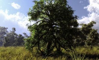 Фото бесплатно дерево, дуб, листья, лето, тепло, трава, лес, небо, облака, природа