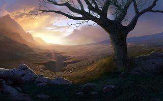 Фото бесплатно дерево, трава, трещина