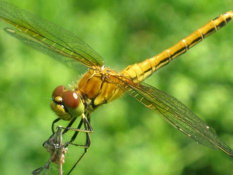 Фото бесплатно стрекоза, насекомые, макро