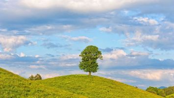 Photo free hills, tree, grass