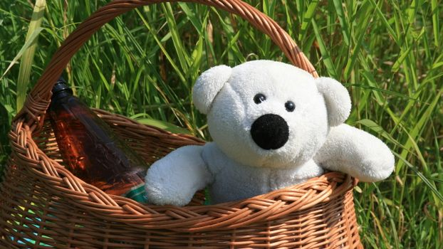 Photo free basket, toy, bear cub