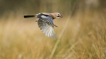 Фото бесплатно крылья, хвост, голова
