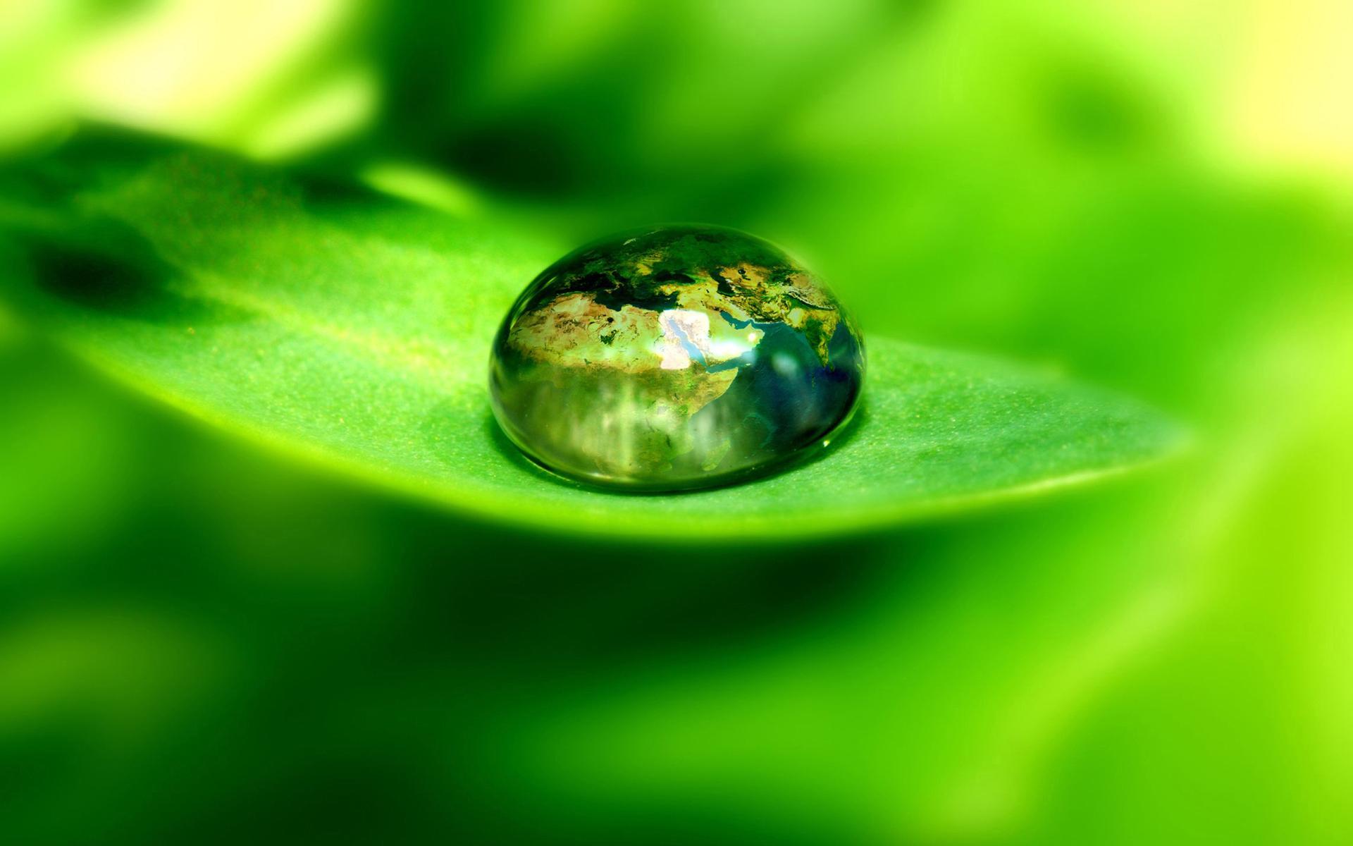 лист, зеленый, капля