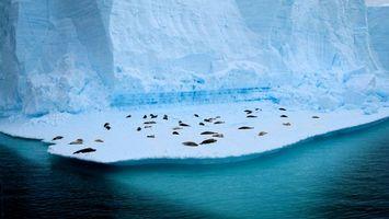 Фото бесплатно море, вода, животные