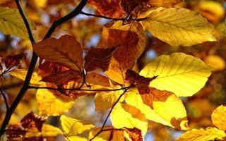 Фото бесплатно осень, листья, ветки, увядшие, желтые, лучи, солнца, природа, макро