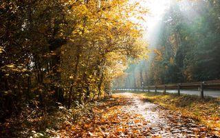 Бесплатные фото осень,лес,дорога,ограждение,трасса,листья,деревья