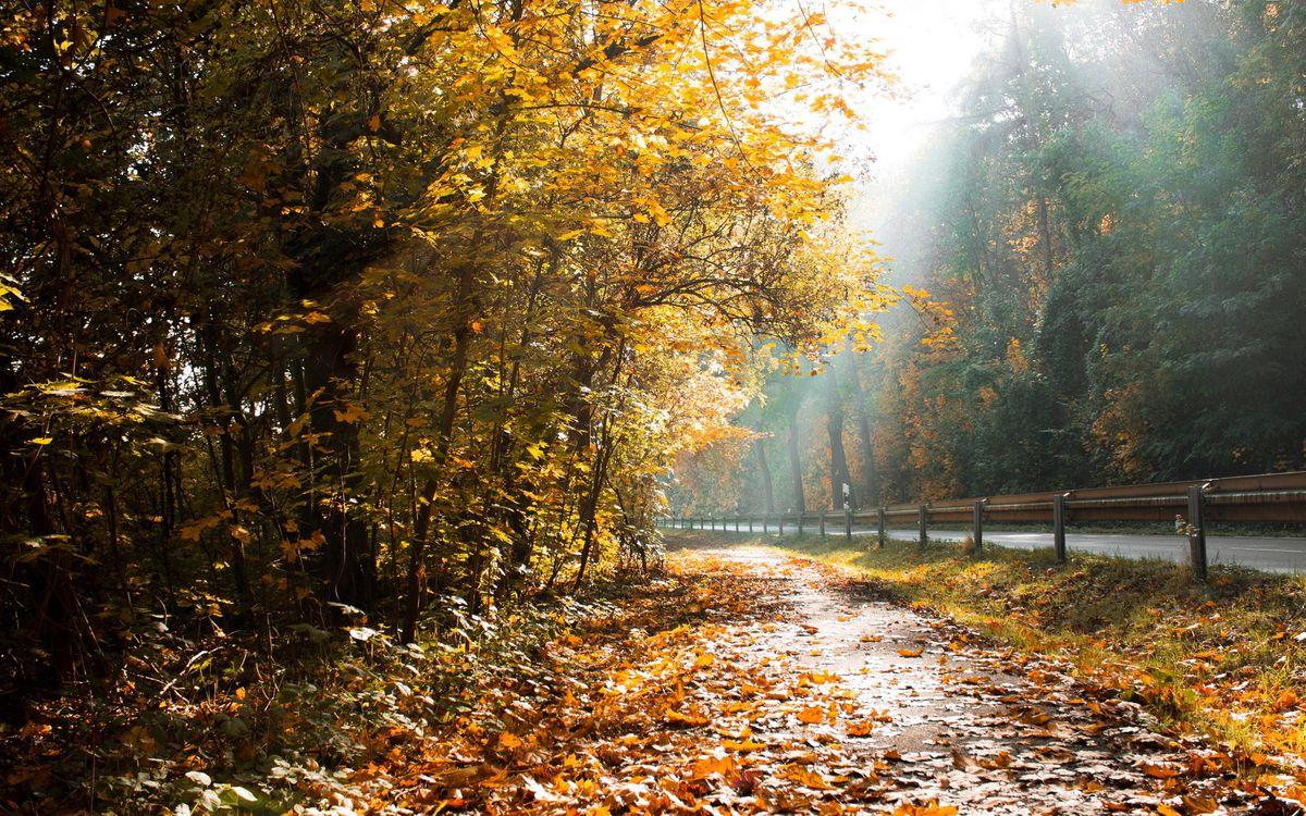 Фото бесплатно осень, лес, дорога, ограждение, трасса, листья, деревья, кусты, пейзажи, природа, природа
