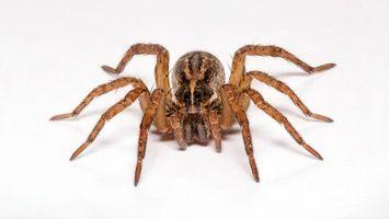 Фото бесплатно паук, лапы, волосы