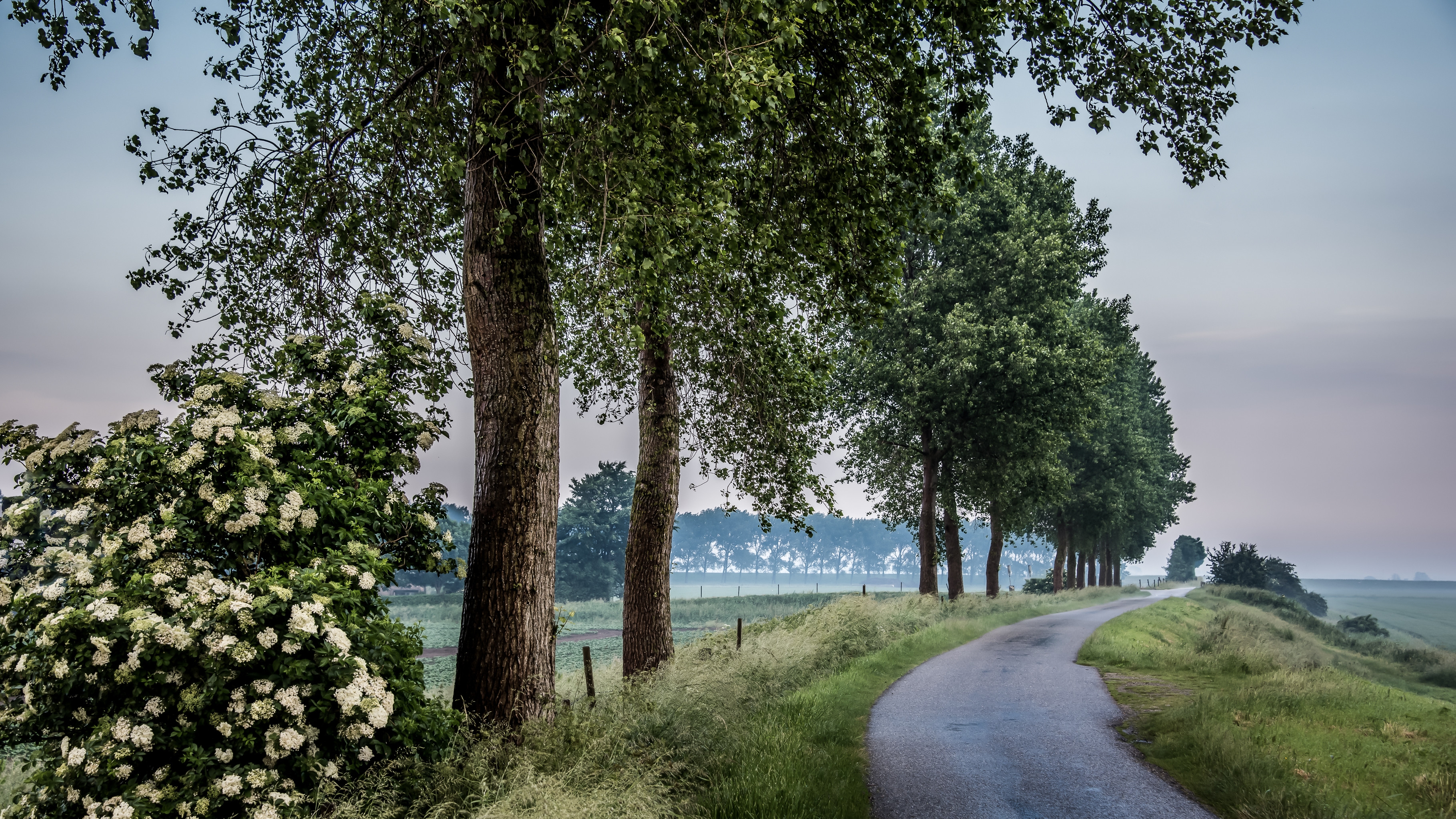 обои поле, дорога, деревья, цветы картинки фото