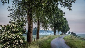 Бесплатные фото поле,дорога,деревья,цветы,туман,пейзаж